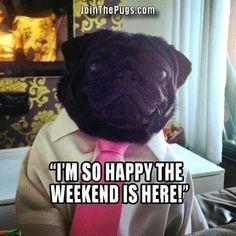 Weekend pug