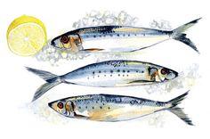 PotAndPantry_Flyer_Front_Sardines by halcyon days