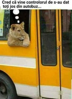 40 Strange Photos Ever Taken That Will Leave You Asking How? - Page 2 of 4 - DrollFeed Funny Cats, Funny Animals, Cute Animals, Animal Fun, Wild Lion, Lion Love, Strange Photos, Lion Cub, Funny Animal Pictures