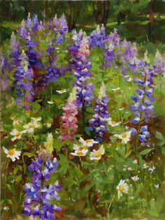 Kathy Anderson Lupine and Daises, 12 X 9