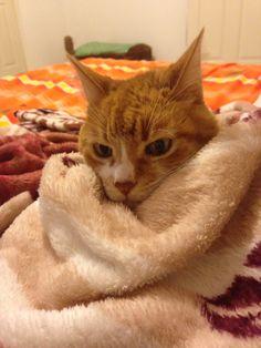 Sube la calefacción, tengo frío!!!