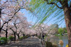 Parque Ueno é o parque mais popular do Japão - Shutterstock