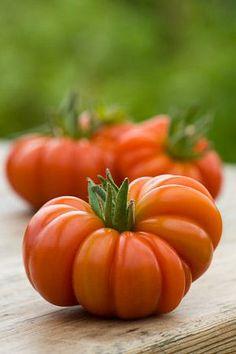 Tomato 'Costoluto Fiorentino'