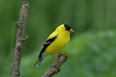 Saw one of these today in the backyard bird feeder of my new house!