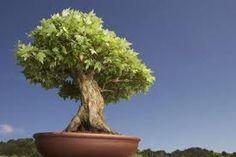 About The Bonzai Tree http://www.lifepopularclothing.com/rusty-juniors-ladder-knit-sweater.html
