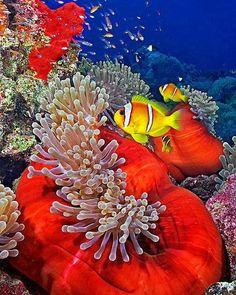 Philippines - Tropical Underwater Wonder World