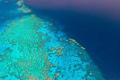 Grande Barreira de Corais - Australia. Paraíso dos mergulhadores. Quem mais aí sonho com essa perfeição da natureza? #soliciteturismo #agenciadeturismobsb #agenciadeviagensbsb #dicasdeviagem #roteirosdeviagem #consultoriaemviagem #viagempersonalizada #honeymoon #luademel #noivas #noivasbsb #oceania #australia #grandebarreiradecorais #greatcoralreef #scuba #scubadiving #naturewonder #greatbarrierreef -----------------------------------------------------Great Barrier Reef - Australia…