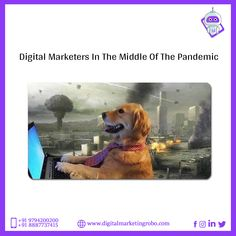 Digital Marketers Save Lifes. 'Cause They Stay Indoors. They Are Smart. Be a Digital Marketer. University Memes, Los Millennials, Relatable Meme, Australian Cattle Dog, Offensive Memes, Edgy Memes, Funny Cute, Rescue Dogs, Dankest Memes
