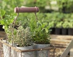 Herbs are the name given to a wide variety of plants across many families. Usually, herbs are employed as flavoring in cooking or baking; these plants are versatile, used fresh or dried. Most herbs . Metal Planters, Garden Planters, Balcony Garden, Galvanized Planters, Container Gardening, Gardening Tips, Herb Container, Indoor Gardening, Culture D'herbes