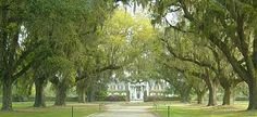 Boone Hall Plantation, Charleston, SC. I wish my house was at the end of this!