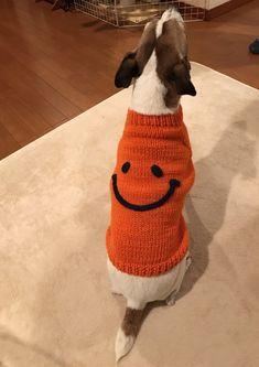 ペット セーター