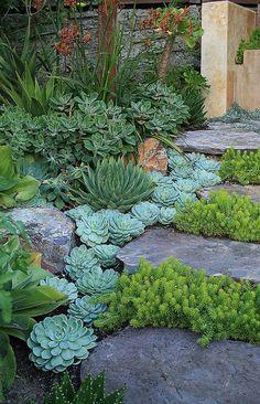 succulents - side yard                                                       …