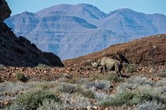 """Mike and Marian's Great Safari Adventure. """"If you want to experience ancient landscapes, then you have to visit Namibia. Rocky Hill, Safari Adventure, Wilderness, Landscapes, Camping, Tours, Mountains, Pictures, African"""