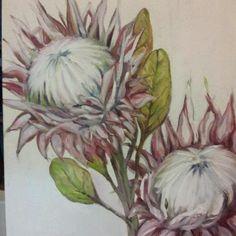 The Smosh Protea Art, Dream Painting, Smosh, Watercolour, Doodles, Paintings, Artists, Floral, Flowers