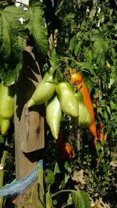 Sibirischer Finger Finger, Stuffed Peppers, Vegetables, Food, Meal, Fingers, Stuffed Pepper, Eten, Vegetable Recipes