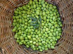 """Voilà une recette typiquement provençale... et qui me rappelle mon enfance et ma grand-mère ! De fin septembre à mi-octobre, c'est le moment idéal pour sortir la jarre en terre du placard (""""la biche"""" diront certains). L'olivier est chargé d'olives bien..."""