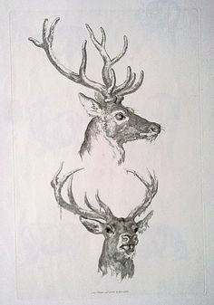 19th century original etching of Deer by Robert Hills