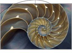Fibonacci in nature - Nautilus Shell Fibonacci In Nature, Fibonacci Spiral, Nautilus Shell, Rule Of Thirds, Earthship, Recycled Materials, Decorative Bowls, Shells, Google Search
