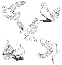 how to draw a realistic dove - Google Search
