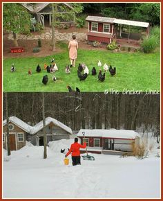 Everything you need to know about preparing for and surviving winter with chickens.