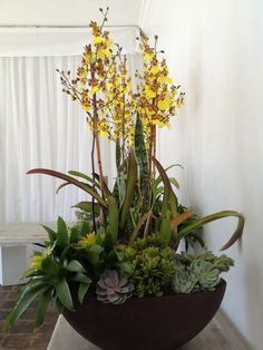 Beautiful succulent and orchid arrangement made by carlos at the Hidden Garden. Orchid Flower Arrangements, Orchid Planters, Orchid Centerpieces, Orchid Pot, Orchids Garden, Succulent Arrangements, Succulents Garden, Planting Flowers, Indoor Garden