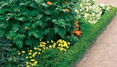 top ten hedges for nz