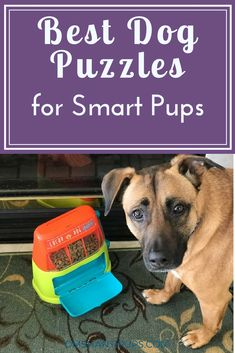 April is Active Dog Month, and one important aspect is exercising your dog's brain, which tires them out mentally and physically. Here's our favorite puzzles!