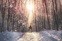 Winterwunderland Snow, Outdoor, Animal Photography, Animales, Outdoors, Outdoor Games, The Great Outdoors, Eyes, Let It Snow