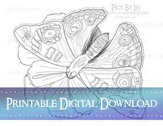"Buckeye Butterfly on Butterfly Cosmos Printable Coloring Page from the book ""Many Meetings: A Nature's Curiosities Coloring Collection"" by Lisa Marie Ford via Digital Download available via the DownontheFarmStudio Shop."