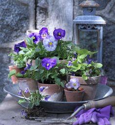 De smukkeste lilla blomster