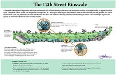 A bioswale is a vegetated channel that treats polluted stormwater run-off from nearby surfaces such as roads and rooftops. A bioswale is specially designed to provide natural water treatment by utilizing the filtering action of native plants and the soil.