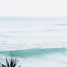 Island State Co ocean inspo Wild Waters, Tropical Vibes, Mellow Yellow, Ocean Waves, Summer Of Love, The Places Youll Go, Strand, Beautiful World, Summer Vibes