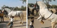 Sapevi che la lunghezza del tuo mignolo può dire molto sulla tua personalità e sul tipo di persona che sei veramente? Horses, Animals, Pagan, Nymphs, Animaux, Horse, Animal, Animales, Animais