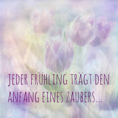 Jeder Frühling trägt den Zauber eines Anfangs in sich. (© Monika Minder)