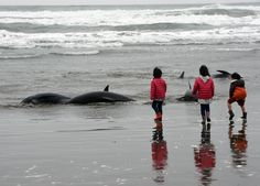 Children look at melon-headed whales beached on the shore of Hokota city, northeast of Tokyo on Apri... - Provided by AFP
