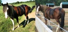 Distractify | These 19 Unusual Horses Have The Most Magnificent Colors You'll Ever See!