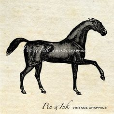 Horse Digital Vintage Graphic No. 2 Antique by PenandInkVintage