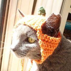 #Cats #Catlovers #Hatsforcats #Orange #Crochet #greycat #kitty #petlovers #giftsforcats #giftsforpets #etsy #zxcvvcxz #catcostumes #yelloweyes #cateyes #cutecats #greatfindsonetsy