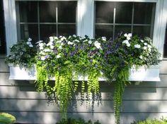 Ein interessanter Blumen Mix aus hängenden Pflanzen und Veilchen