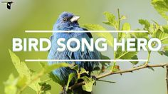 Bird Song Hero: The song learning game for everyone. Science of sound! Can the kids pick the correct sound wave pattern?