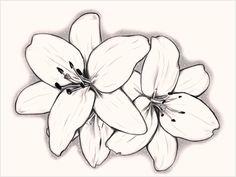 Jasmin-Blumen-Skizzen-süß-Lilly-s-by-kuroshiro-sanviantart-on-deviantart-von -. Lilly Flower Drawing, Orchid Drawing, Flower Sketches, Art Drawings Sketches, Tattoo Drawings, Lilly Flower Tattoo, Lilies Drawing, Shoulder Piece Tattoo, Jasmine Flower Tattoos