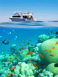 Enjoy Red Sea travel packages with All Tours Egypt