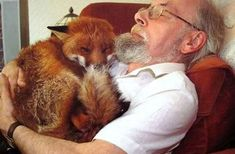 This man rescued this fox from a fight with dogs. He was badly injured and sick with toxoplasmosis, so this very kind man nursed him back to health and named him Cropper. They have now spent the last six years together enjoying each others company. Human compassion can be such a beautiful thing...