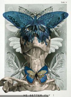 Skulls and butterflies