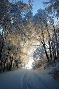 ideas nature winter snow forests for 2019 Winter Szenen, Winter Love, Winter Magic, Winter Trees, Snowy Trees, Winter Light, Tree Photography, Winter Photography, Stunning Photography