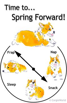 """""""Time to...Spring Forward!"""" Cute Pembroke Welsh Corgi leads the way - from CorgieWorld."""