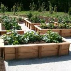 Loved Beds With Crushed Limestone Walks   Vegetable Gardening