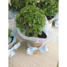 Basil, Plants, Wedding, Architecture, Google, Valentines Day Weddings, Arquitetura, Weddings, Planters