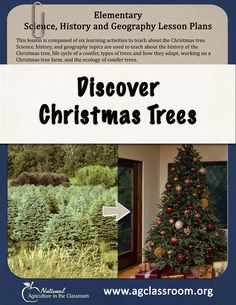Elementary lesson plan all about Christmas trees. Integrates Science, Geography, and History standards, Perfect for December.