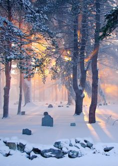 ***A snowy cemetery with sunlight filtering through (New Hampshire) by Peter Cedric Rock Smith / 500px
